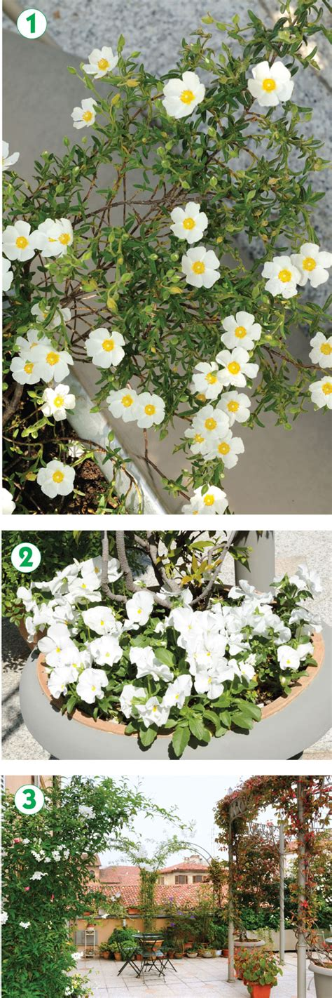 giardino pensile terrazzo giardino pensile in citt 224 fai da te in giardino