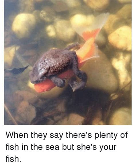 Fish In The Sea Meme - 25 best memes about plenty of fish plenty of fish memes