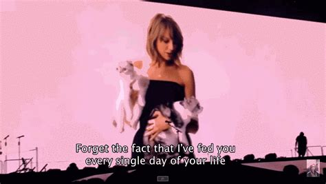 taylor swift cat concert video 27 times taylor swift failed so hard she almost won