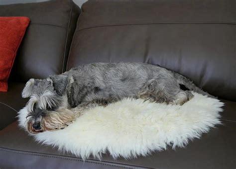 sheepskin rug for dogs pet sheepskin rug