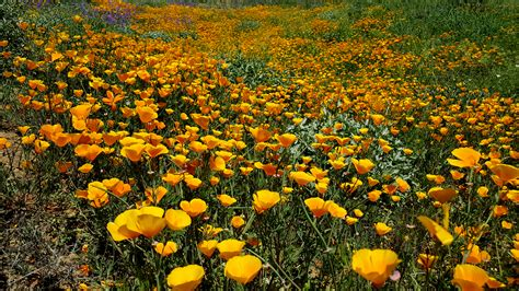 super bloom anza borrego anza borrego super bloom alternatives anza borrego
