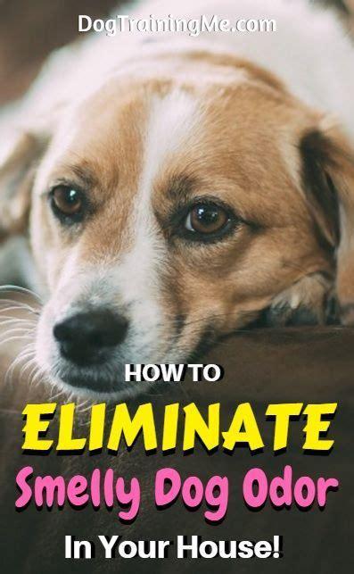 getting rid of dog odor in house 25 beste idee 235 n over honden urine op pinterest hond urine verwijderaar reinigen