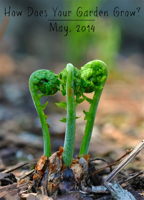 How Does Your Garden Grow by How Does Your Garden Grow May 2014