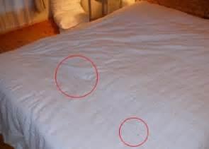 exterminateur punaises de lits 233 liminer la cimex lectarius