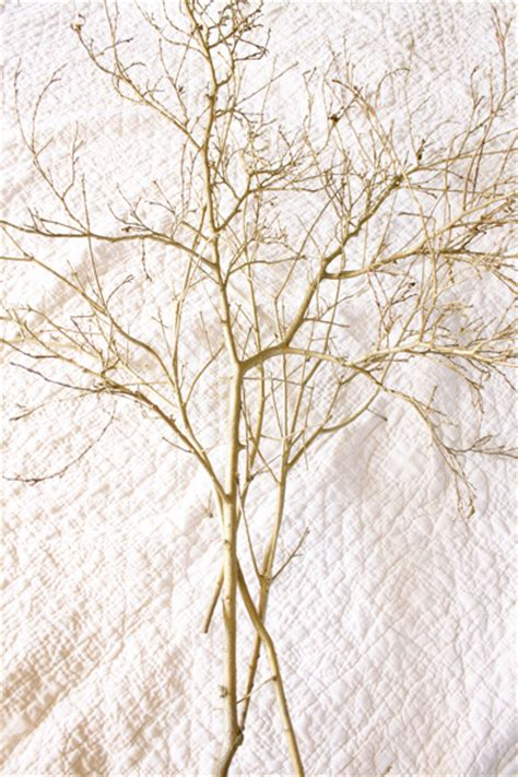 spray painting tree branches a thankful tree a free fall craft decorchick