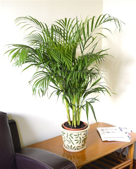 Indoor Plants by Indoor Plants