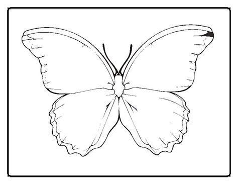 butterflytemplates colouring pages