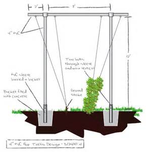 Hop Growing Trellis Design trellis construction how to grow hops