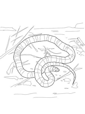 milk snake coloring page coral snake coloring page free printable coloring pages