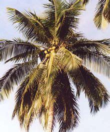 kelapa wikipedia bahasa indonesia ensiklopedia bebas