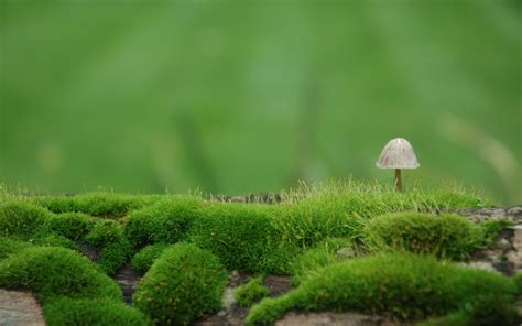 desktop wallpaper for eye protection mushroom full hd wallpaper and background 2560x1600 id
