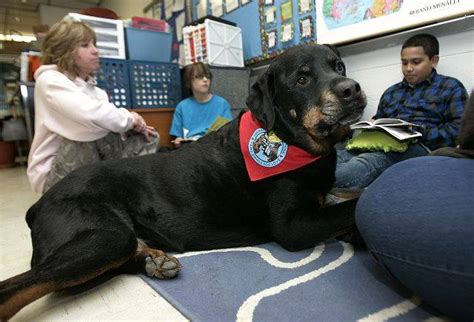 rottweiler therapy raymond ellis students read to dogs