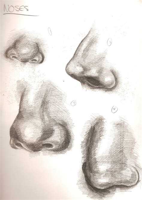 Sketches Nose by Noses Sketches By Ashleysexypants69 On Deviantart