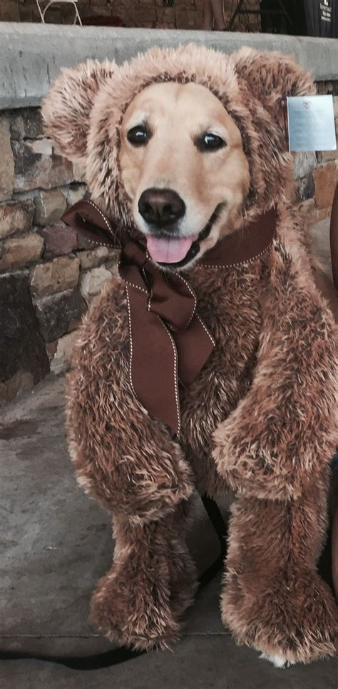 golden retriever costume for person golden retriever costume dogs a s best friend