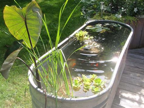 Fish For Backyard Pond by 21 Small Garden Backyard Aquariums Ideas That Will