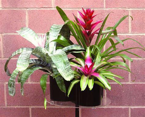 tropical plants chicago interior landscaping plant rental foliage plants