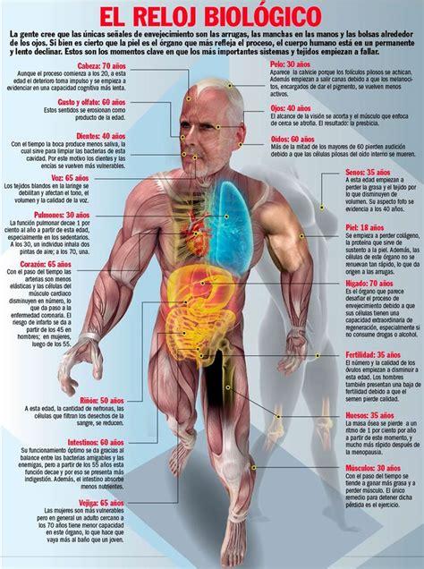 el cuerpo humano 8449438667 122 best images about el cuerpo humano on