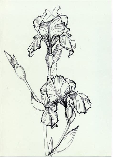 coloring pictures of iris flowers iris coloring page сорочьи радости пятница развлекушки