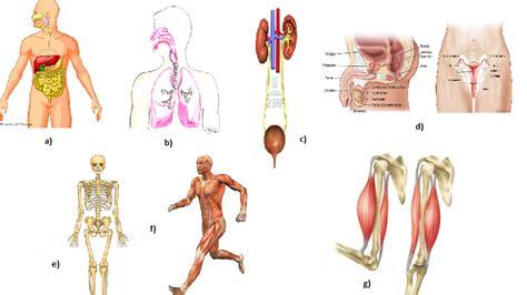 biolog 237 a y geolog 237 a smsavia generalidades de aparatos y sistemas 24 tes aparatos y sistemas del cuerpo humano el cuerpo