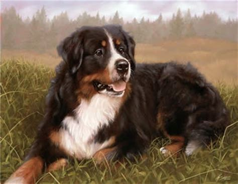 bernese mountain price bernese mountain by silver price 163 57 55