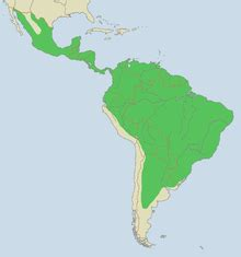 Where Do Jaguars Live In America Wikijunior Big Cats Jaguar Wikibooks Open Books For An