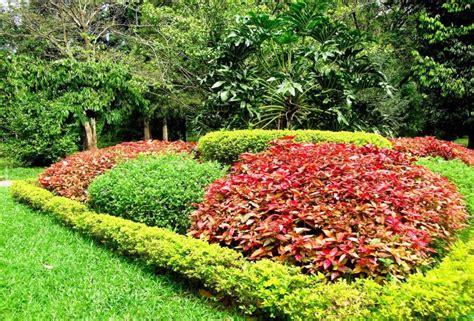 botanical gardens in ta ta botanical gardens ta botanic gardens trail kenny chen