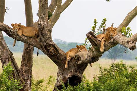 queen elizabeth national park uganda wildlife 3 days queen elizabeth national park wildlife safari