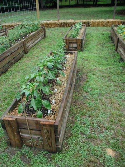 best 25 straw bale gardening ideas on hay