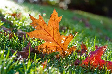 fall landscaping ideas fall landscaping ideas for your charleston home carolina
