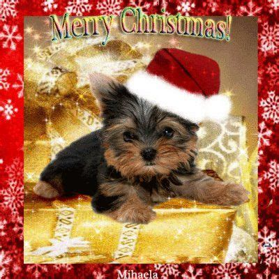 christmas yorkie wallpaper 378 best puppies images on pinterest