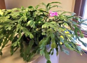 list of tropical plants tropical house plants names darxxidecom