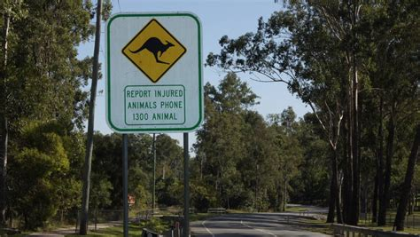 Mba Queensland Insurance by Wildlife Insurance Spike In Winter Months Jimboomba Times