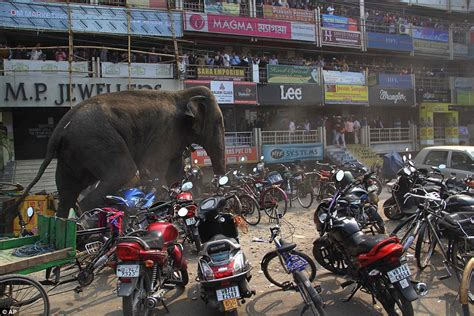 India West Bangal Modifikasi Car by Bloodied Elephant Rages Through West Bengal In India