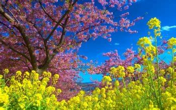 colors of spring alpha coders your source for wallpapers art gifs