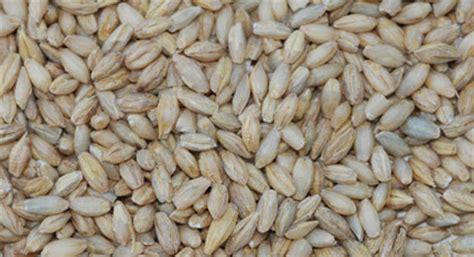whole grains barley organic whole grain barley products