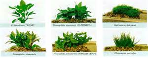 What are some different kinds of plants in an aquarium?