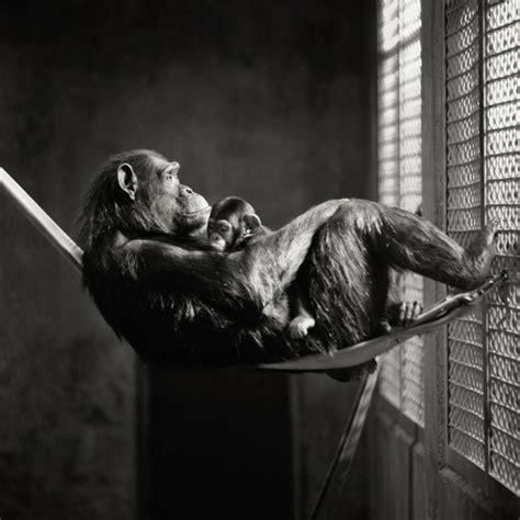Wo Kann Baby Affen Kaufen 4725 by Schwarz Wei 223 Fotografie Wie Kann Die Fotos Verbessern