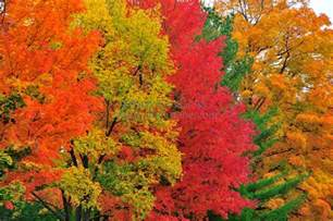 what are fall colors fall color sequence tim erskine