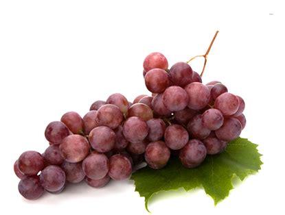 imagenes de uvas en dibujo frutas de piura uva
