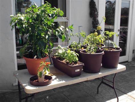 Standing Vegetable Planter nana smith designs large organic standing vegetable planter box