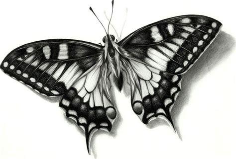 imagenes de mariposas a lapiz dibujos de mariposas a lapiz buscar con google draws