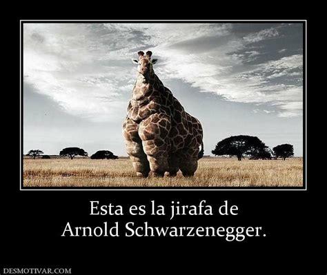 imagenes de jirafas con mensajes desmotivaciones esta es la jirafa de arnold schwarzenegger