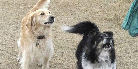 dogs and antifreeze calgary dogs poisoned by antifreeze