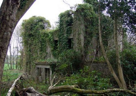 5 plants that grow in abandoned buildings urban ghosts