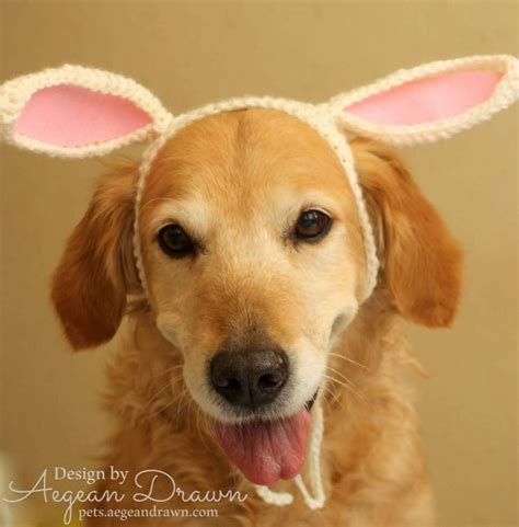 bunny ears for dogs bunny ears for dogs rabbit ears for dogs bunny by aegeandrawn