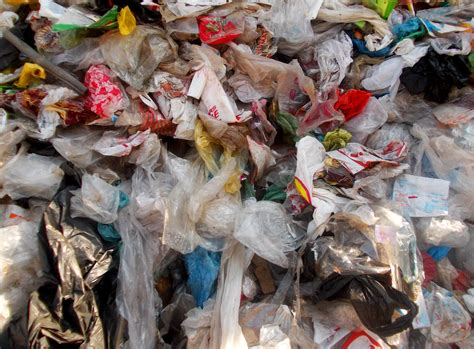 plastic bags in the great pacific garbage patch earthcapades