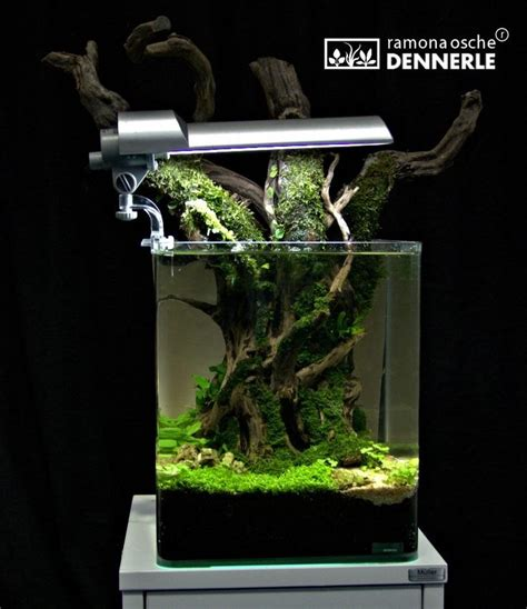 setting aquascape 1000 images about freshwater aquarium ideas on pinterest
