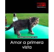 Imagenes De Gatitos Tiernos Con Frases Amor Pareja Quotes