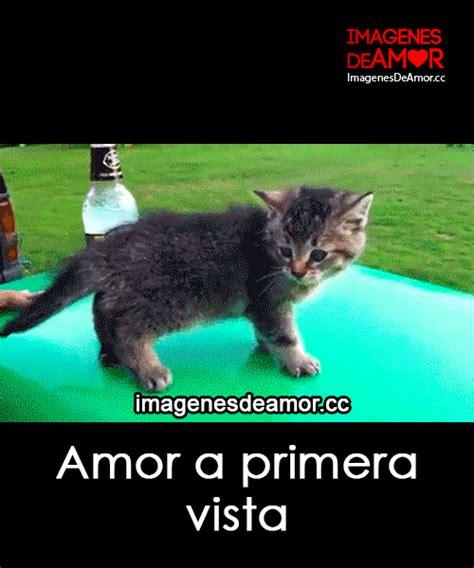 imagenes gif graciosas de amor 5 gif de gatos graciosos con frases cortas de amor