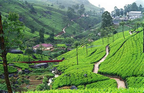 Of Wales Mba In Sri Lanka by Manicured Landscape Sri Lanka With And New